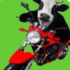 La vache qui roule